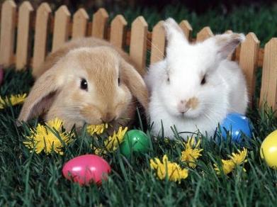 Resultado de imagen de conejo de pascua